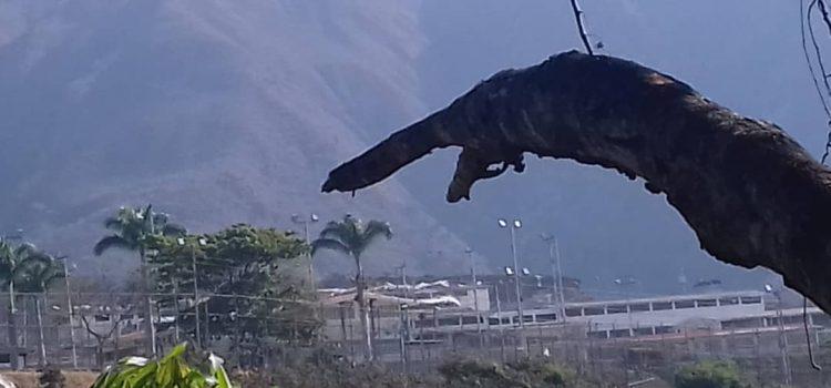 ODH-ULA solicita visita de la Defensoría del Pueblo al Centro Penitenciario de la Región Andina